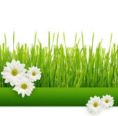 Grass and daisies — Foto Stock