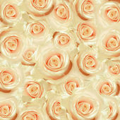 White rose flowers — Stock Photo