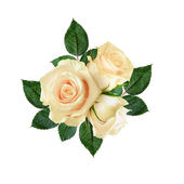 Rose flowers composition — Stock Photo
