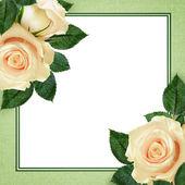 Peach rose flowers — Stock Photo