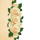 Rose flowers arrangement  — Stock Photo