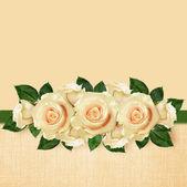 Rose flowers arrangement  — Stock Photo