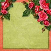 Rose flowers on holiday background  — Stock Photo