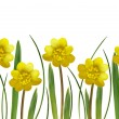 Yellow spring flowers and grass — Stock Photo