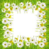 Grass and daisy flower frame — Stockfoto