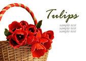 Tulip flowers in a basket — Stockfoto