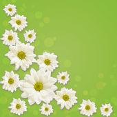 Daisy flowers arrangement — Φωτογραφία Αρχείου