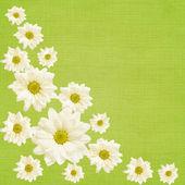 Daisy flowers arrangement — Stock Photo