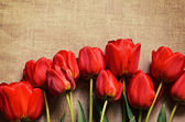 Tulip flowers on canvas — Stock fotografie
