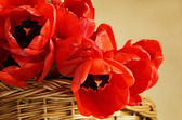 Tulip flowers in a basket  — Stock fotografie