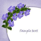 Periwinkle flowers line in a corner — Stockfoto