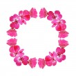 Pink frame with geranium flowers — Stock Photo #46609895