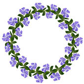Periwinkle flowers line in a circle — Stock Photo