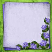 угол цветы барвинок — Стоковое фото