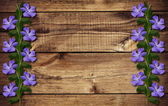 Periwinkle flowers on wood — Stock Photo