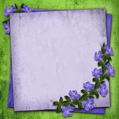 Periwinkle flowers background — Stock Photo