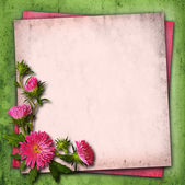 Aster flowers on vintage background — Stock Photo