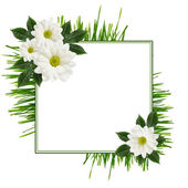Daisy flowers  arrangement and a frame — Photo