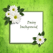 Daisy flowers  arrangement and a frame — Stok fotoğraf