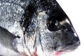 Fresh fish called dorade sea live marine alimentation — Stock Photo