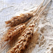 Flour for bakery wheat ingredient nutrition basic element of healthy and diet — Stock Photo #30046611