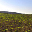Winery panoramic views in springtime wine of spain landscapes — Stockfoto