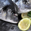 Gilthead fish in food kitchen preparation ingredient — Stock Photo