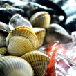 Sheel fish and mollusk seafood view — Stock Photo #33689269