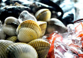 Sheel fish and mollusk seafood view — Stock Photo