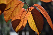 Autumn leafs seasonal time — Stock Photo