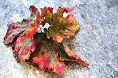 Autumn seasonal time fallen leaf — Stock Photo