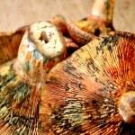 Mushroom brown close up view — Stock Photo #36361495