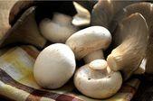 Mushrooms in table kitchen on napkin — Stock Photo