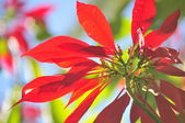 Beauty flower tropical elegance plant — Stock Photo