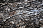 Old ancient texture wood — Stock Photo