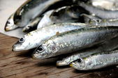 Fresh fish sardine raw ingredient omega protein healthy diet — Stock Photo