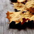 Autumn leaves fallen time — Stock Photo