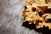 Jesienne liście poległych czas — Zdjęcie stockowe