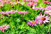 весной красоты blosson время цветок — Стоковое фото