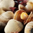 Stock Photo: Cockles