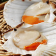 Fresh scallops — Stock Photo