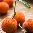 Arbutus berries — Stock Photo