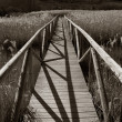 Wooden boardwalk over swamp — Stock Photo
