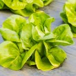 Hydroponic vegetable — Stock Photo