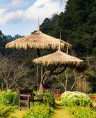 Tezgah bahçe — Stok fotoğraf