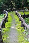 Walkway to jungle — Stock Photo