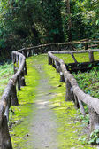 Walkway to jungle — Stock Photo