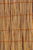 Bamboo Texture — Stock Photo