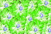 Green flower for background — Stock Photo