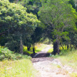 Forest trail — Stock Photo #39140659